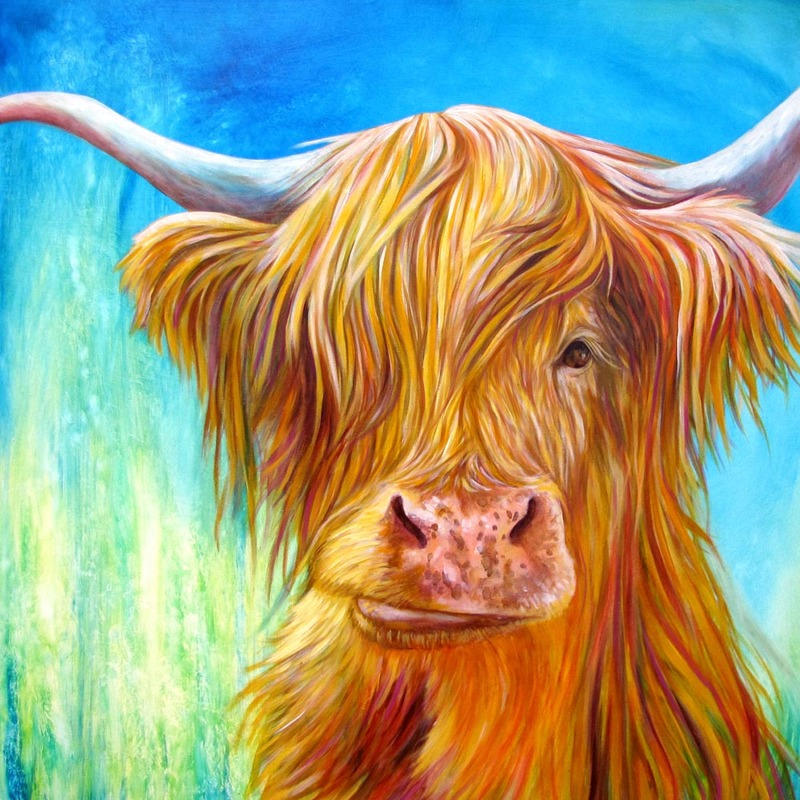 "Higland Cow; Oil on Canvas - 24"" x 24"" - $800 By Kate Green"